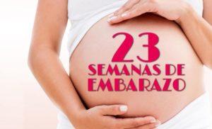 semana 23 embarazo peso
