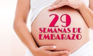 semana 29 embarazo cuantos meses