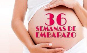semana 36 embarazo