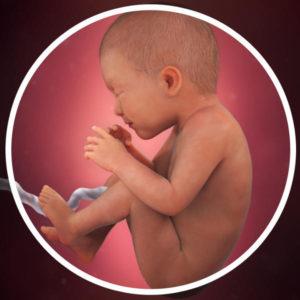 semana 35 embarazo gemelar