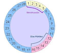 calculadora embarazo dodot
