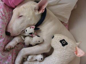 embarazo perros sintomas