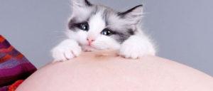 gatos embarazo mujer