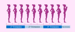 embarazo de 8 semanas