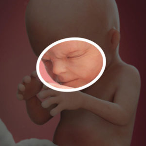 semana 14 embarazo sintomas