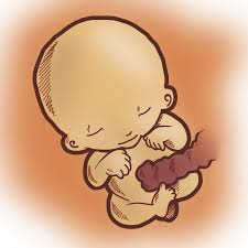 semana 14 embarazo