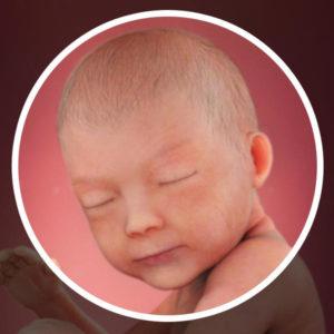 semana 30 embarazo mellizos
