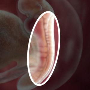 semana 5 embarazo sintomas